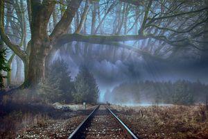Заставки деревья, туман, железная дорога