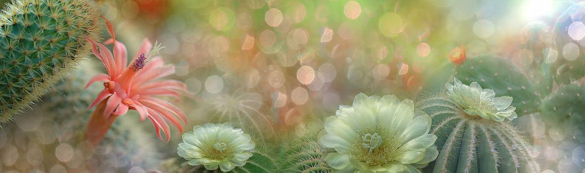 Заставки кактусы, цветок, цветы