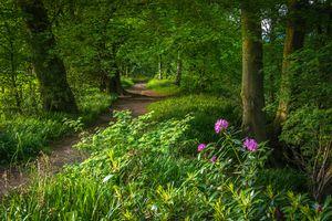 Заставки пейзаж, тропинка, лес