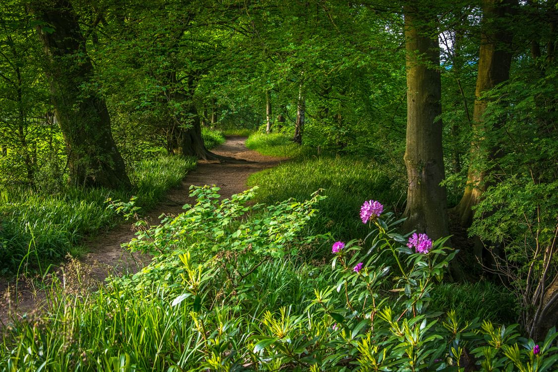 Картинки лето лес