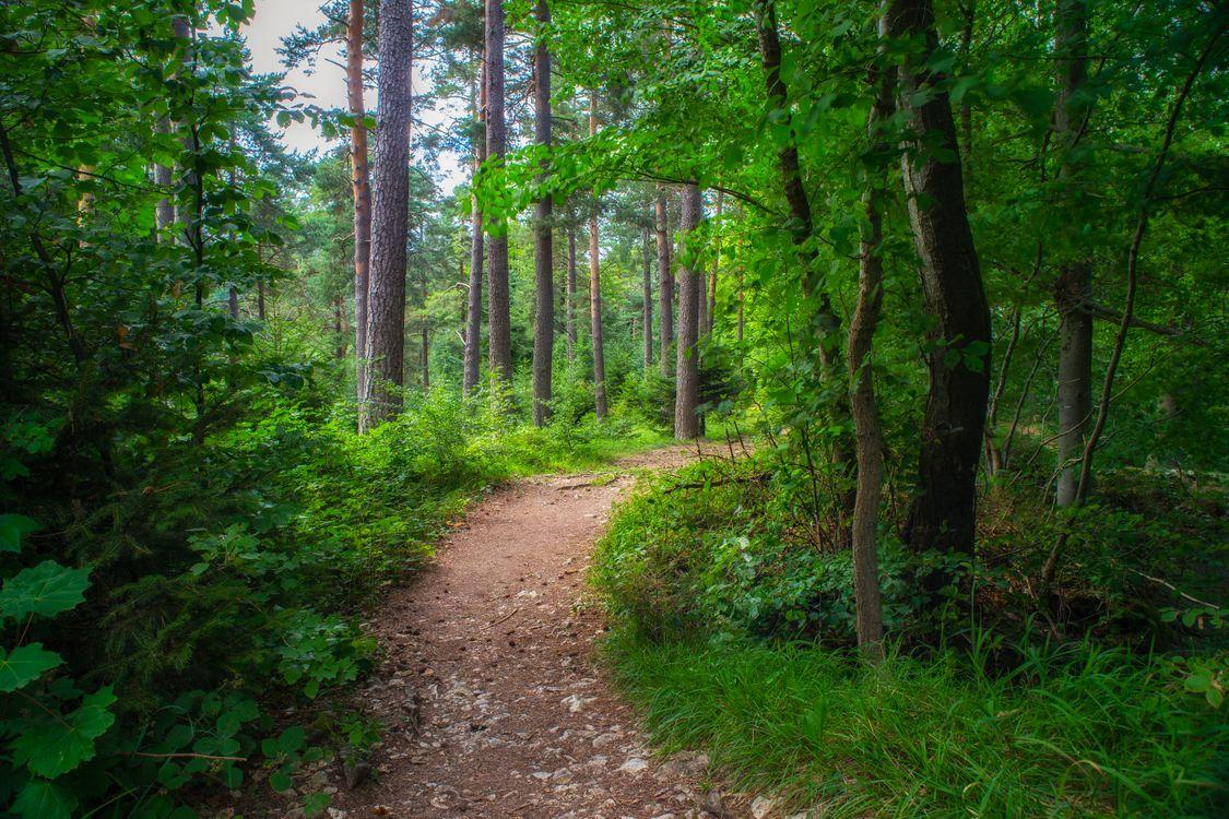 Фото бесплатно лес, тропинка, деревья, природа, пейзаж, пейзажи