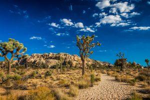 Бесплатные фото Национальный парк Джошуа-Три,Калифорния,дерево джошуа,горы,Joshua Tree National Park,пейзаж