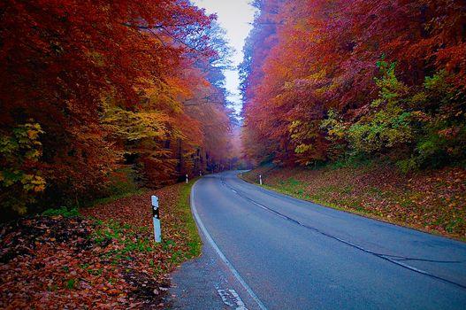 Фото бесплатно лес, осенние краски, дорога