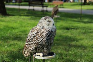 Фото бесплатно сова, стоя, белый