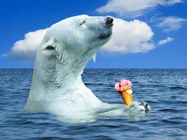 Фото бесплатно белый медведь, полярный медведь, животные
