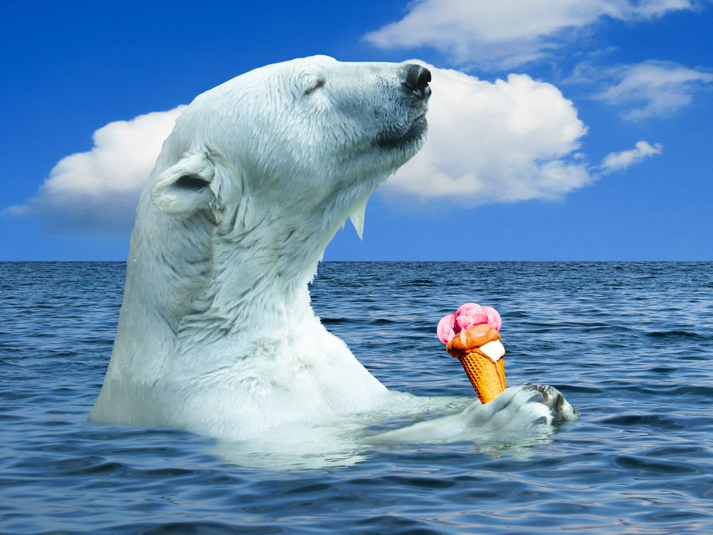 Фото бесплатно белый медведь, полярный медведь, животные, медведь, хищник, океан, вода, море, северный полюс, Арктика, мороженое, фотошоп, животные
