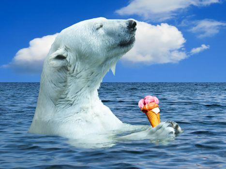 Бесплатные фото белый медведь,полярный медведь,животные,медведь,хищник,океан,вода,море,северный полюс,Арктика,мороженое,фотошоп