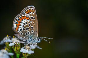 Бесплатные фото бабочка,цветок,крылья,разноцветные,красивые,макро,усики