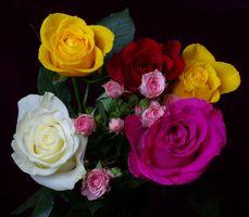 Фото бесплатно цветы, розы, цветочные