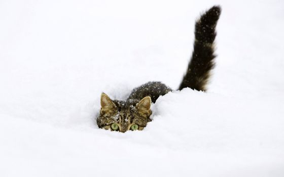 Photo free the snow, cat in snow, tail