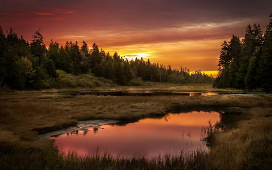 Photo free sunset, forest, swamp