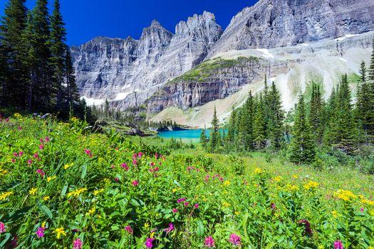 Фото бесплатно Lake Trail, Glacier County, United States, glacier national park, озеро, горы, деревья, поле, цветы, пейзаж