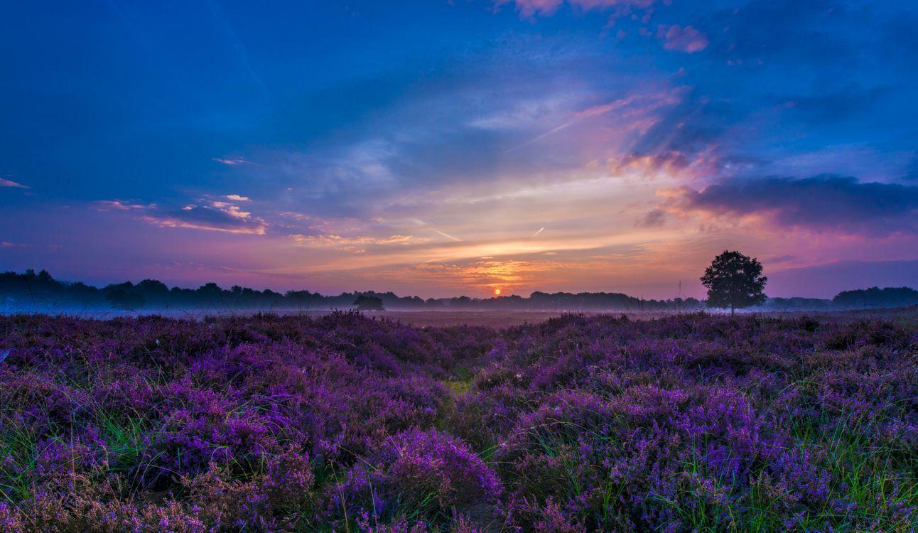 Фото бесплатно лавандовое поле, закат солнца, красивое небо, поле, лаванда, цветы, природа, пейзаж, пейзажи
