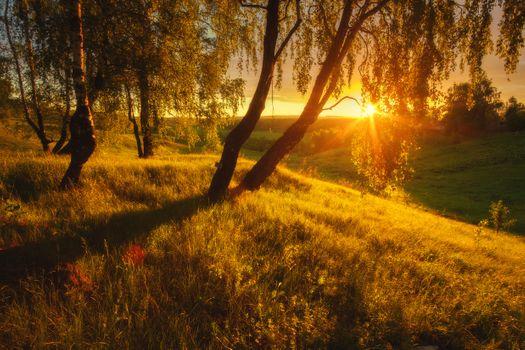 Золотая роща · бесплатное фото