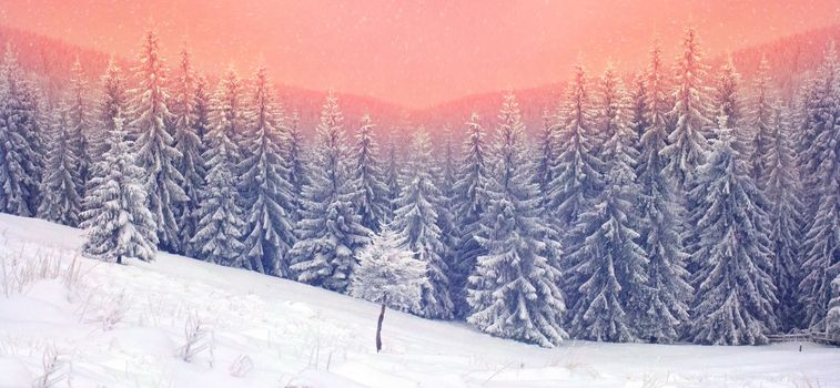 Photo free landscapes, snow on trees, nature