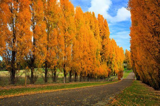 Заставки осень,деревья,листва,осенние листья,природа,пейзаж,осенние краски,дорога,осенняя дорога