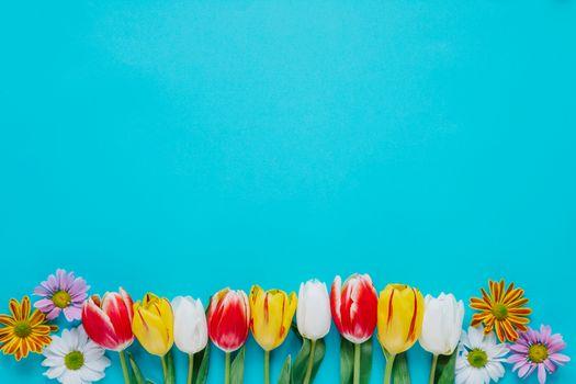 Фото бесплатно цветы, тюльпаны, голубой фон