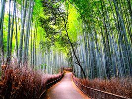 Заставки Арасияма, бамбуковый лес, деревья