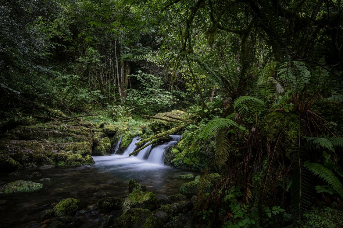 Фото бесплатно конечно, природа, деревья - на рабочий стол