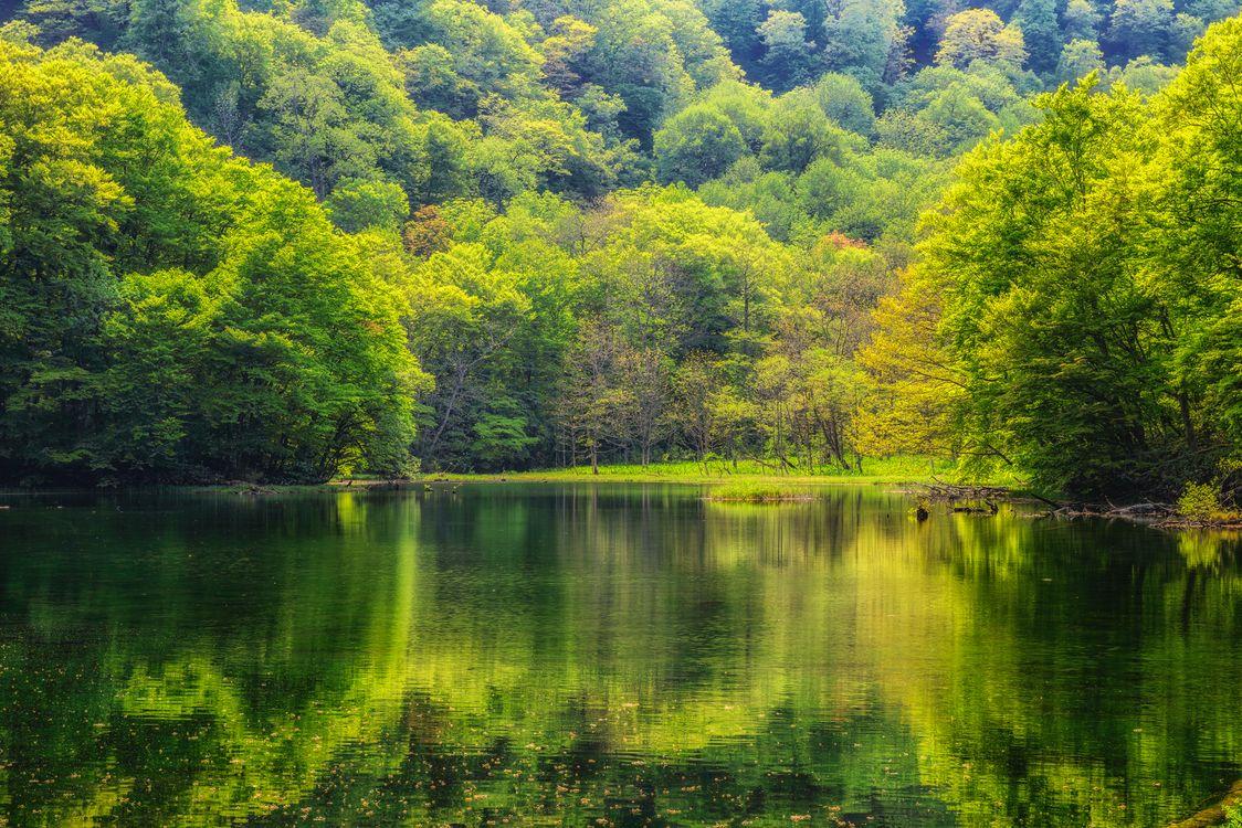 Фото бесплатно лес, деревья, водоём, пейзаж, пейзажи