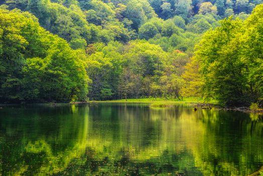 Бесплатная картинка водоём, лес