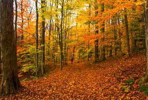 Заставки девушка, природа, деревья