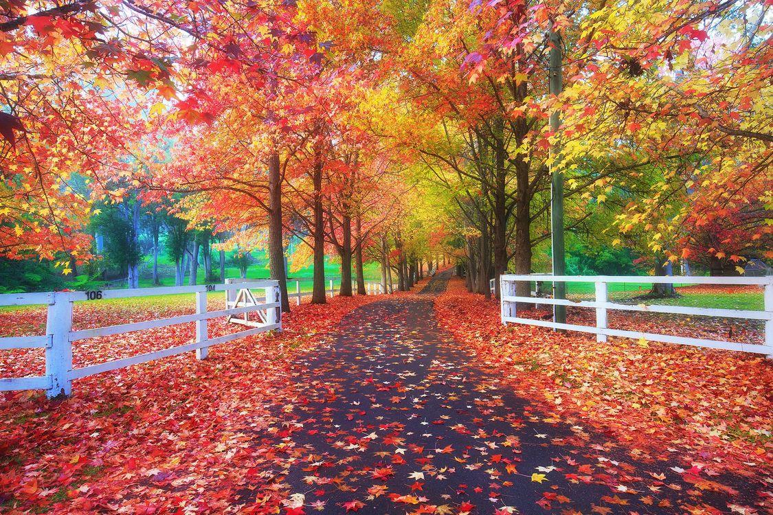 Фото бесплатно осень, парк, поляна, деревья, листва, осенние листья, забор, природа, пейзаж, осенние краски, дорога, осенняя дорога, пейзажи