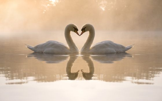Photo free swans, lake, reflection