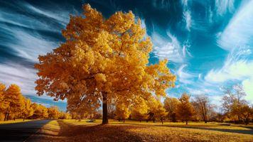 Бесплатные фото осень,поле,дорога,деревья,небо,природа,пейзаж