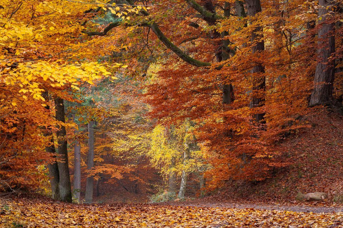 Осенний парк с красивыми деревьями · бесплатное фото