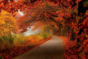 Заставки осенняя дорога, осень, дорога