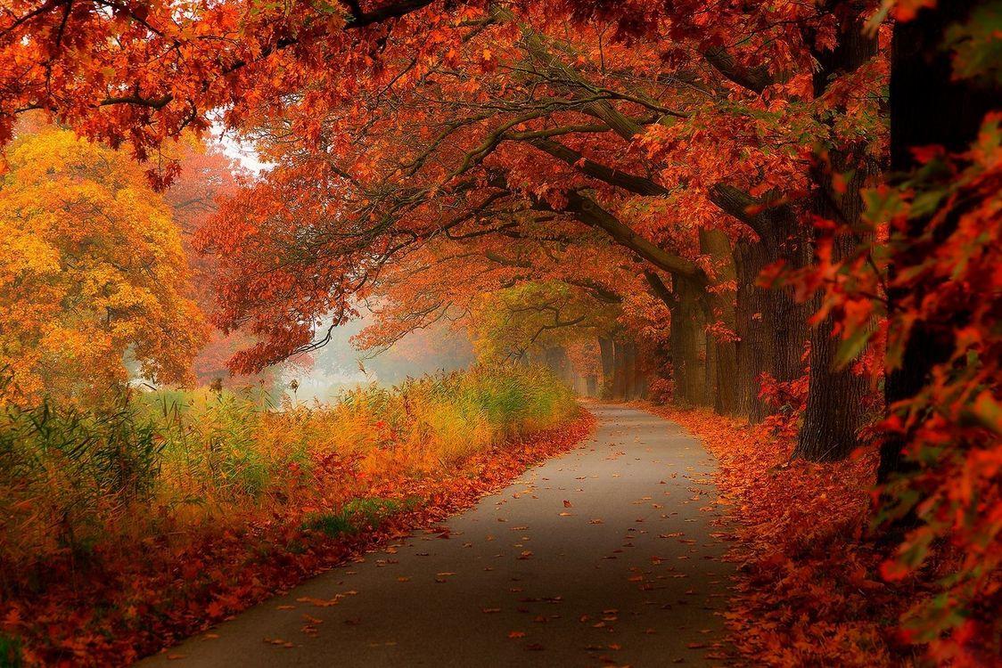 Фото бесплатно осенняя дорога, осень, дорога - на рабочий стол