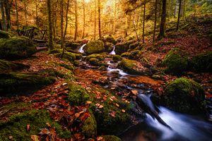 Бесплатные фото Шварцвальде,Германия,осень,речка,лес,деревья,водопад