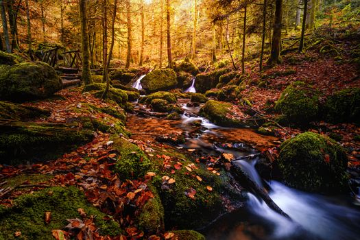 Photo free Black forest, Germany, autumn