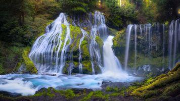 Заставки водопад, лес, деревья