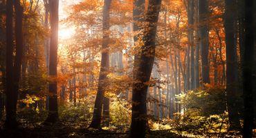 Фото бесплатно листва, деревья, оранжевый