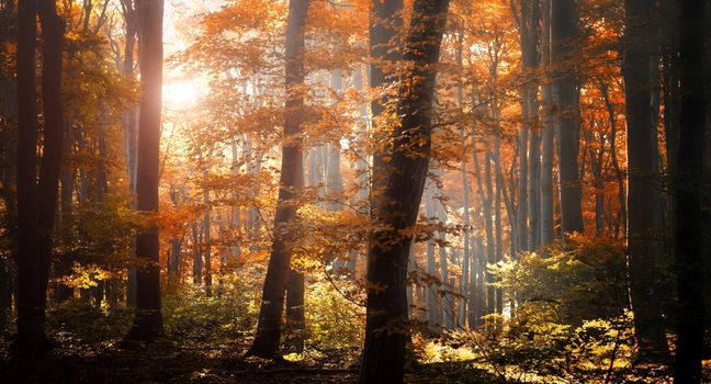 Photo free foliage, trees, orange