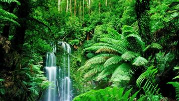 Photo free forest, green, jungle