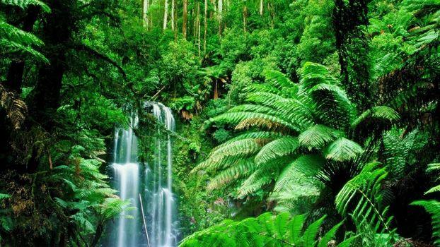 Фото бесплатно лес, зеленый, джунгли