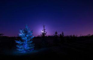 Бесплатные фото ночь,поле,деревья,иллюминация,луна,лунный свет,силуэты
