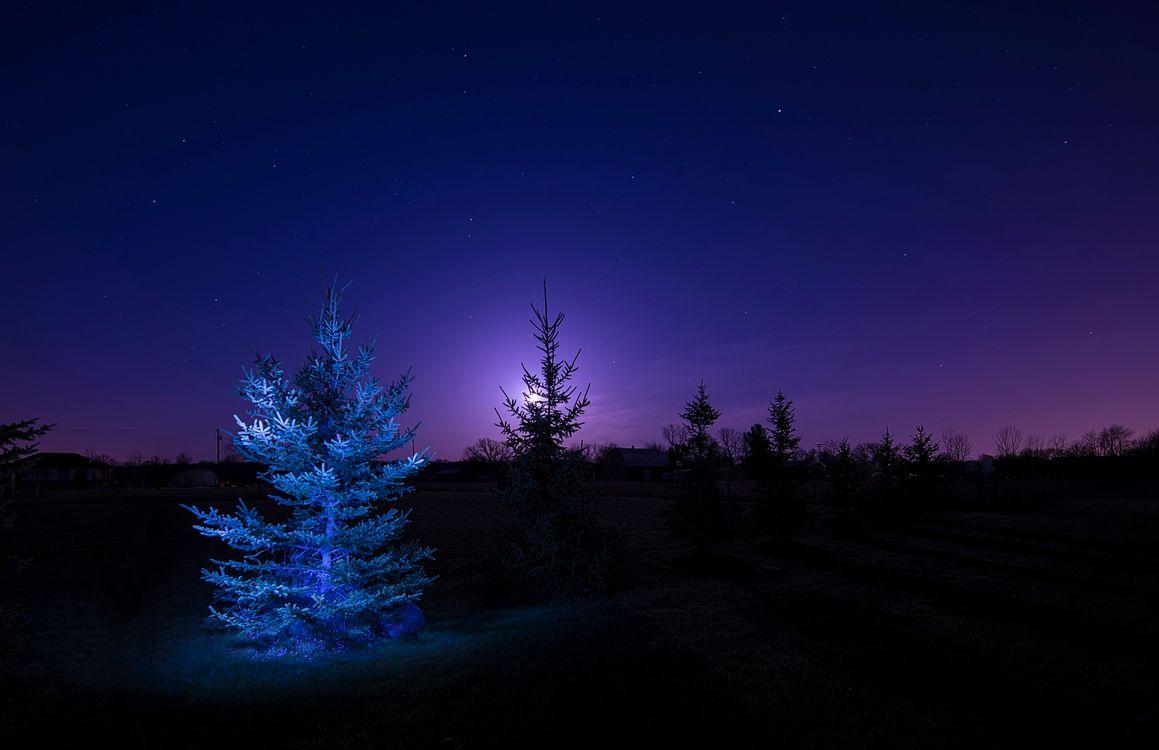 Фото бесплатно деревья, природа, лунный свет - на рабочий стол