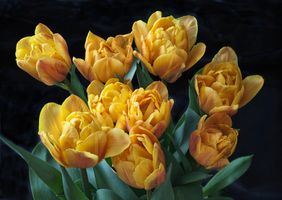 Photo free yellow tulips, bouquet, flowers