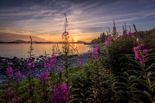 Бесплатные фото Аляска,Остров Баранова,остров Ситка,закат,море,цветы,берег,пейзаж
