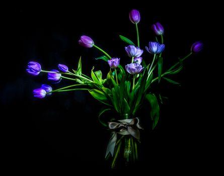 Photo free black background, flora, bunch