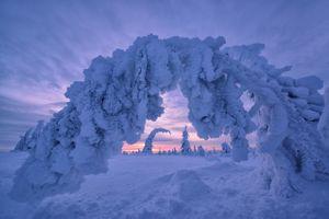 Заставки Финляндия, природа, деревья