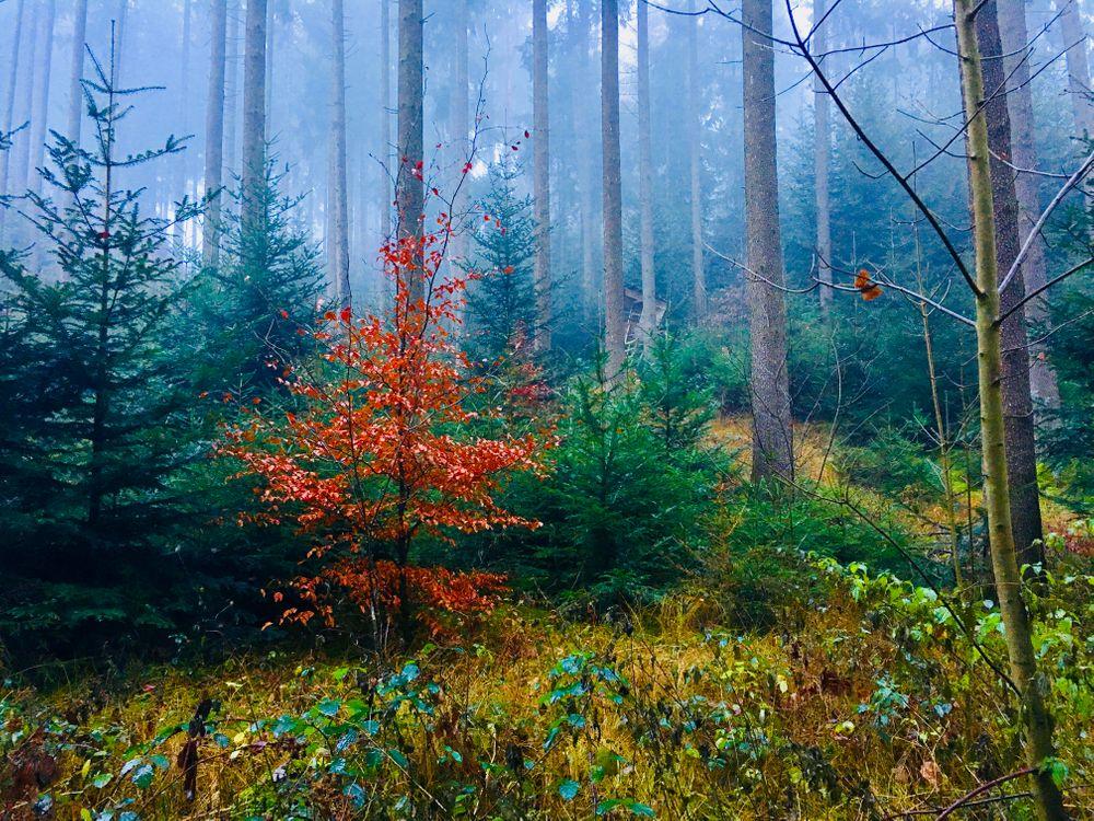 Фото бесплатно утро, лес, природа - на рабочий стол