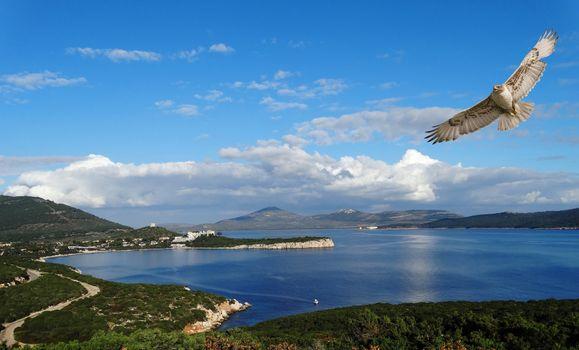 Фото бесплатно Порто Конте, ястреб, Коралловая ривьера