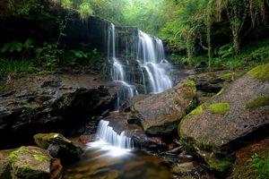 Фото бесплатно природа, речка, лес