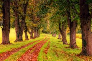 Фото бесплатно дорога, природа, аллея