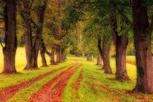 Бесплатные фото осень,дорога,парк,деревья,аллея,природа,пейзаж